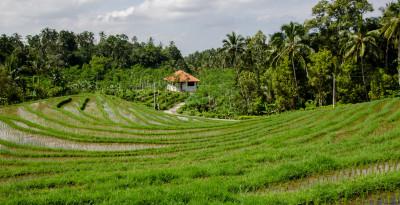La condizionalità in agricoltura principi, norme e applicazioni