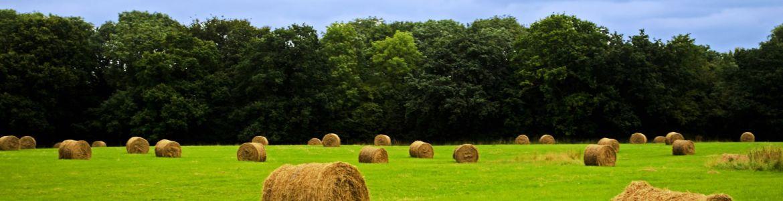 Gestione tecnica, organizzativa ed economica di una impresa agricola