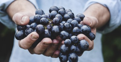Tecniche di potatura in viticoltura