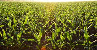 Operatore della trasformazione agroalimentare. Percorso triennale di Istruzione e Formazione (IeFP) 2015
