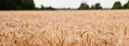 Misure ISMEA per Startup e sviluppo di impresa delle aziende agricole