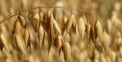 tecnico superiore della commercializzazione dei prodotti agroindustriali
