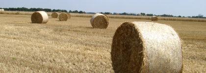 Aiuto all'avviamento di imprese per i giovani agricoltori – Sottomisura 6.1
