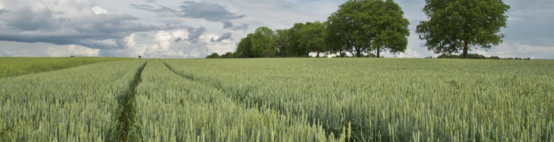 Sostegno-investimenti-nelle-aziende-agricole-sottomisura4.1