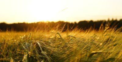 ambiente, biodiversità e sviluppo