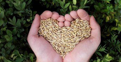 produttività e sostenibilità in agricoltura